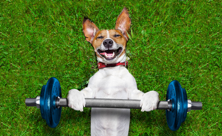 How to work out with your dog