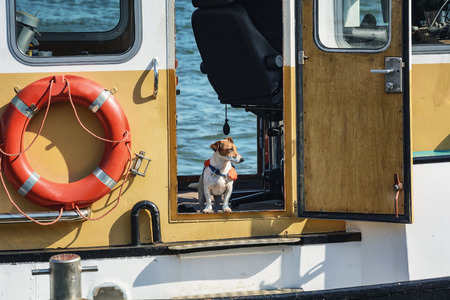 Dog with lifejacket